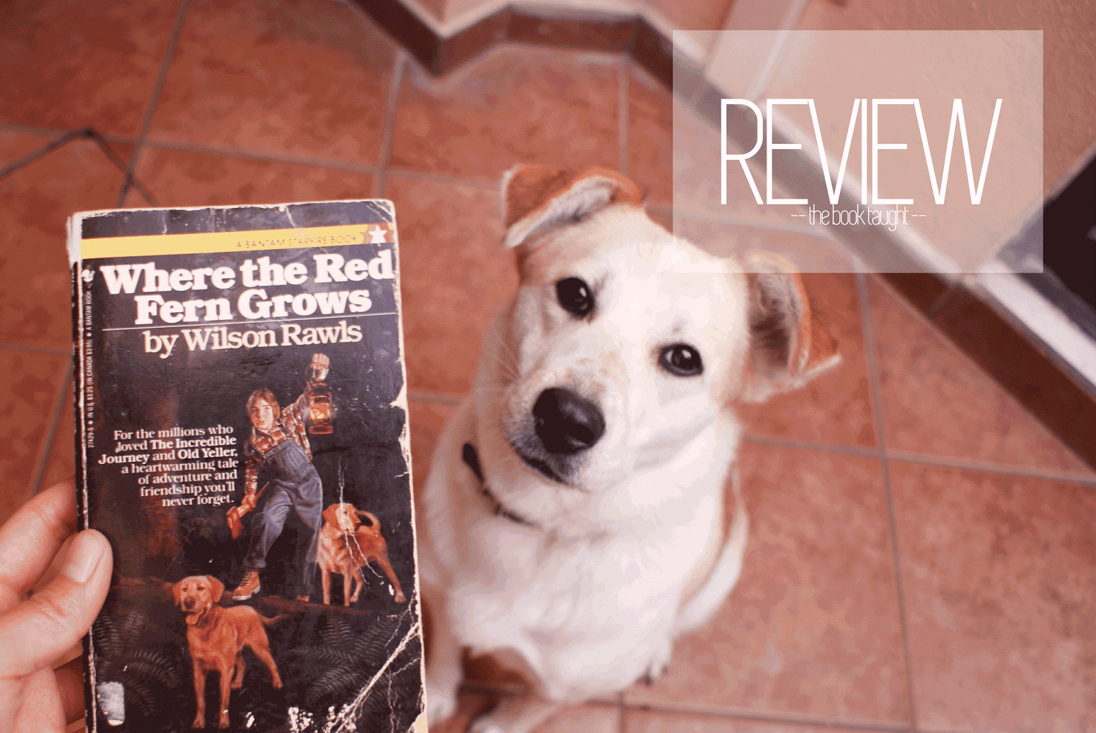 where the red fern grows review