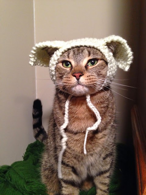 Cat Hats For Cats