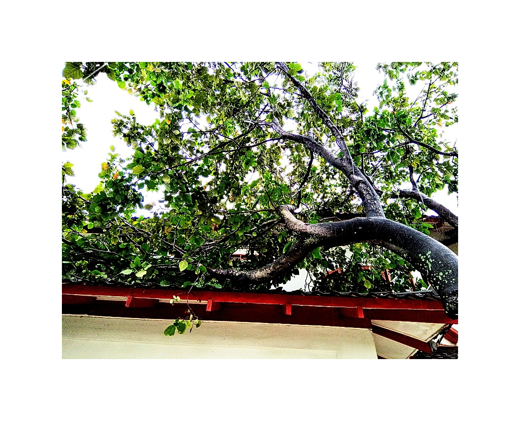 And The Tree Came Crashing Down 03