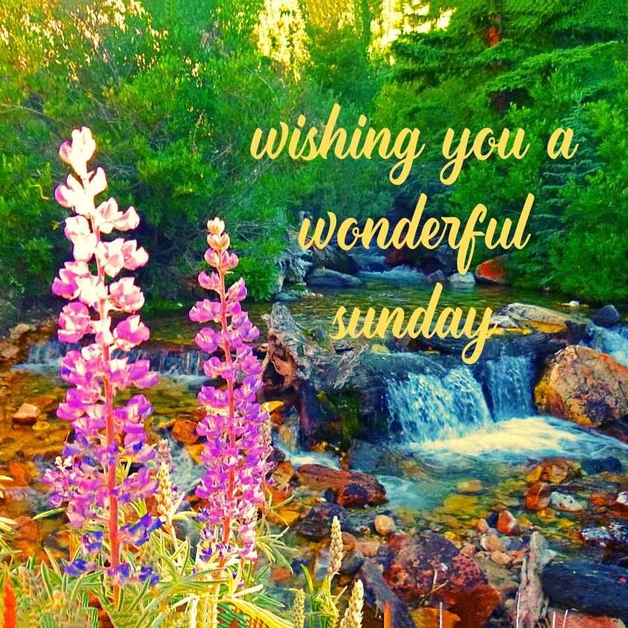good mornigood morning images sundayng images sunday