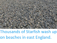 https://sciencythoughts.blogspot.com/2018/03/thousands-of-starfish-wash-up-on.html