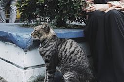 Tumbuh Bersama Kucing