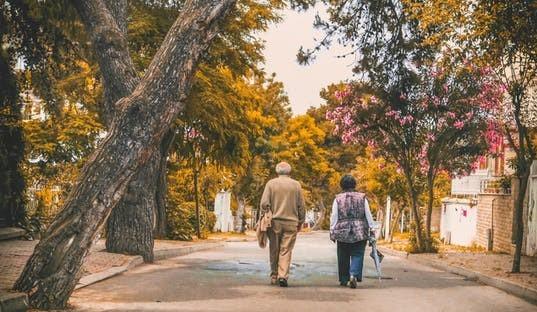 並木道を歩いている老夫婦の後ろ姿