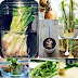Growing plants from kitchen scraps