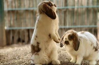 gambar Bolehkah kelinci makan nasi basi