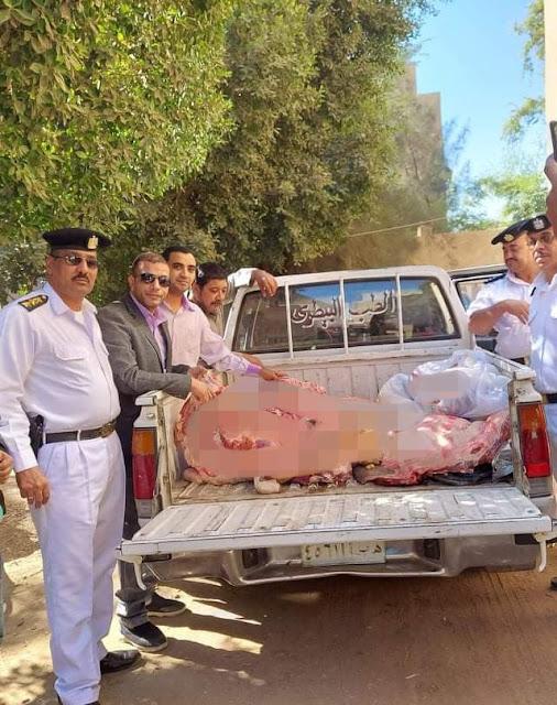 شبح سوهاج يتوعد مزورى أختام اللحوم ويضبط 500 كيلو بمدينة ساقلته