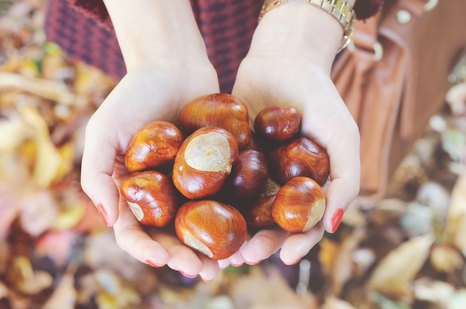 autumn conkers, fall photography, autumnal photos, autumn photos