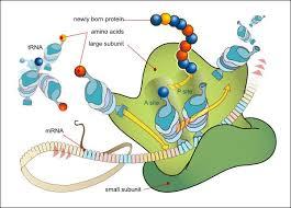 Moleküler Biyoloji ve Genetik nedir