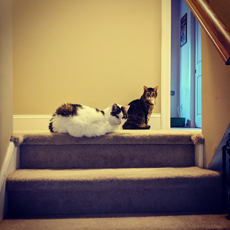 image of Olivia the White Farm Cat lying and Sophie the Torbie Cat sitting at the top of the stairs together