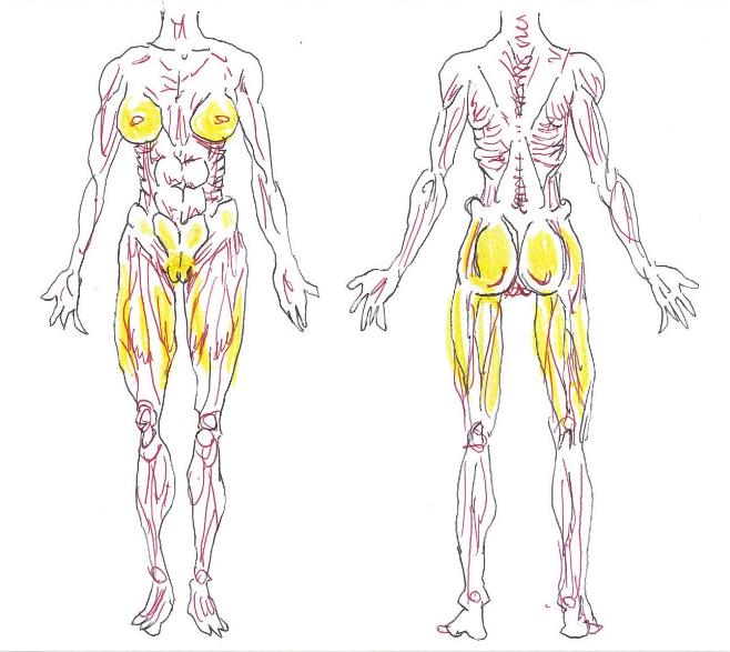 desenho da gordura líquida no corpo feminino não parecer aqueles