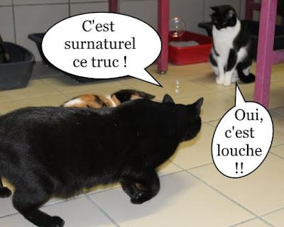 Des chats intrigués par des bulles de savon.