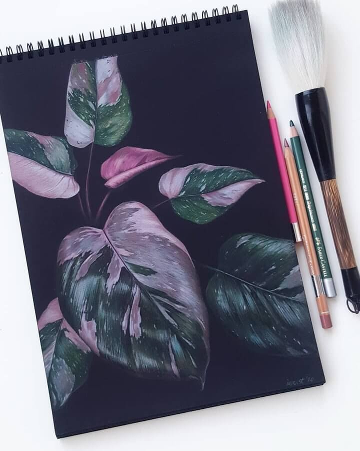 11-Pink-princess-philodendron-Ievast-www-designstack-co