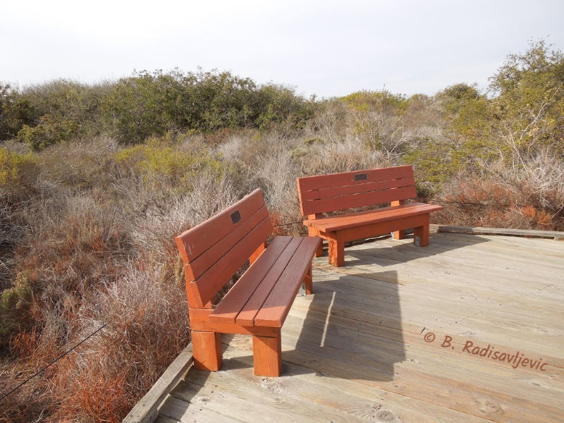 The Elfin Forest in Los Osos, California: A Review in Photos: A Resting Place