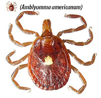 Rural weekly reports on increasing tick-borne allergy to red meat