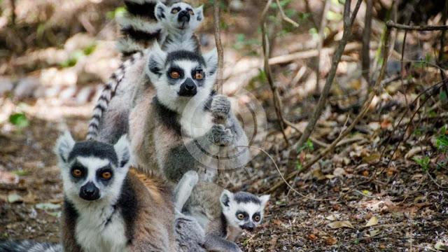 Madagascar, land of diversity