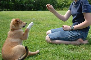 Trucos de entrenamiento básico para tu perro