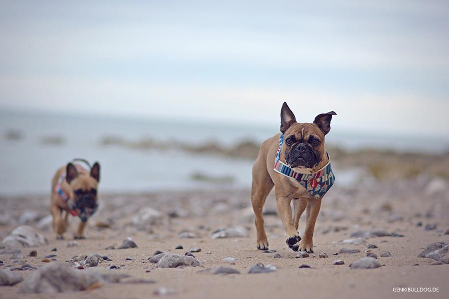 Hundeblog Genki Bulldog - L'Aiguille d'Étretat