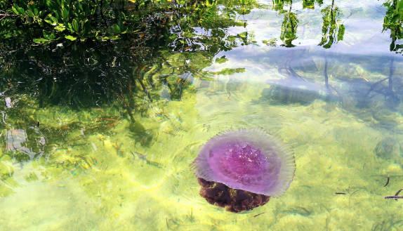 4 Tempat Wisata Danau Ubur-Ubur Paling Eksotis di Indonesia