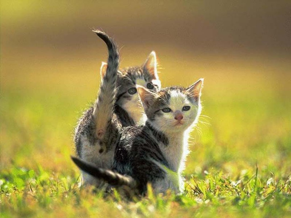 It's HD   Animals-Funny-Wallpapers: amazing animal wallpapers