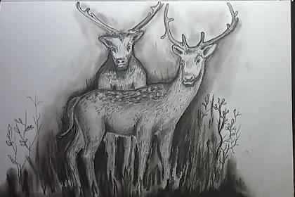 Membuat gambar ilustrasi sepasang rusa di padang rumput