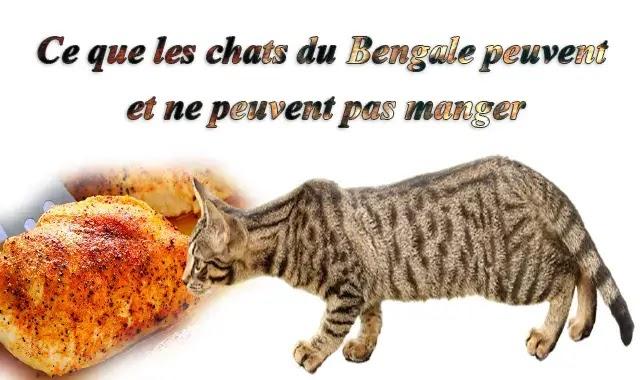 Ce que les chats du Bengale peuvent et ne peuvent pas manger