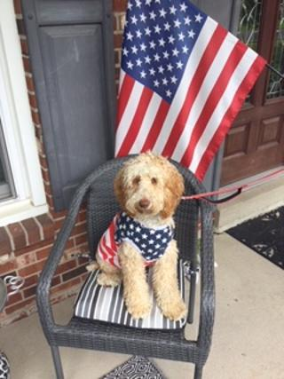 Dog on Independence Day