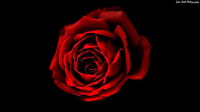 सपने में लाल फूल देखने का क्या मतलब होता है?