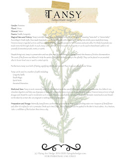 tansy, herb magic, witchcraft, herbal remedies, hedgewitch, green witch, kitchen witch, herb, BOS page, tansy