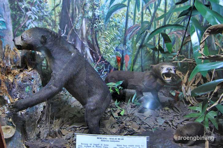 beruang museum zoologi bogor