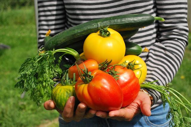 https://www.oblogdomestre.com.br/2020/07/HortasComunitarias.CienciaESaude.Alimentos.html