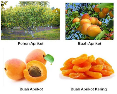 Buah Aprikot Manfaat aprikot