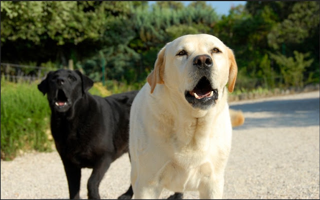 dog bite attorney Dog Bite Lawyer San Diego