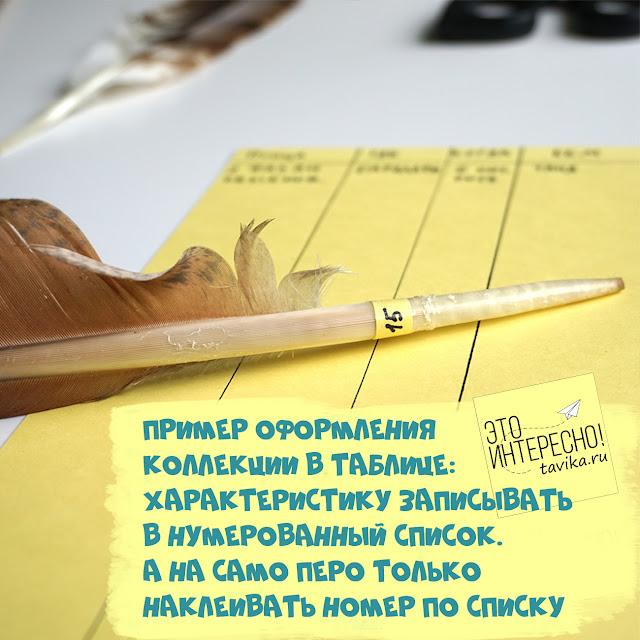 как оформлять перья птиц