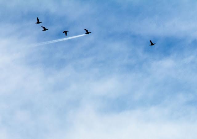"Winner of The Kenya Airways In The Air Category ""Duck Speed"" by John Threlfall"