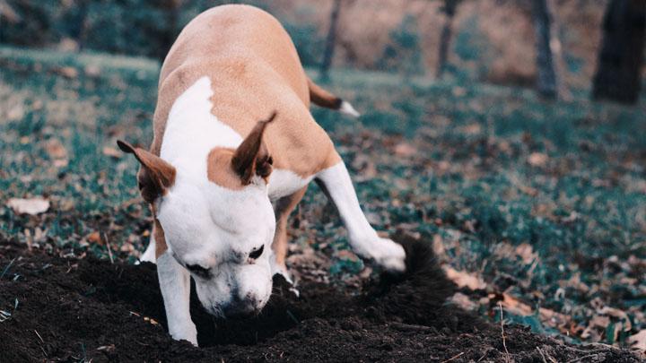 digging dog nursery