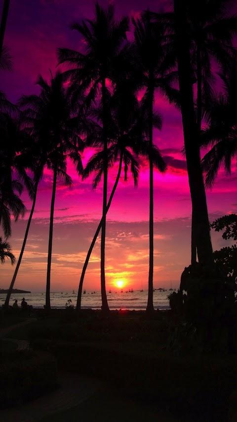 Hình Nền Những Cây Dừa Bãi Biển Đẹp