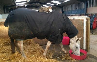 foto tierna gato y caballo