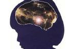 Mengajar Sesuai Cara Kerja Otak adalah Hak Asasi Siswa