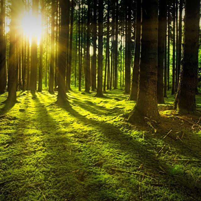 Pequeno conto sobre o inicio de um mundo perfeito. árvore, floresta, gramaso, sol