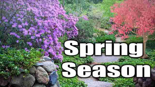 The spring season image used for essay on spring season in english