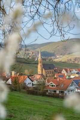 Pfälzer Mandelpfad | Etappe 05 Edenkoben – Birkweiler | Wandern Südliche Weinstraße | Mandelblüte Pfalz 19