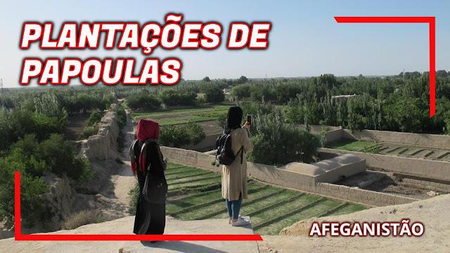 plantação de papoulas no afeganistão