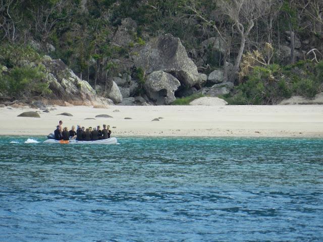 snorkeling whitsunday island australia