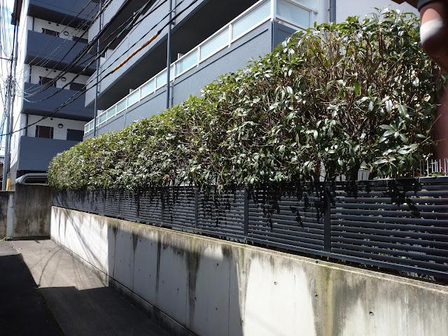 京都市中京区壬生マンション緑化管理