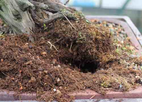 Bonsai mini dep, bonsai mini đẹp, hướng dẫn chăm sóc bonsai mini, cách chăm bonsai mini