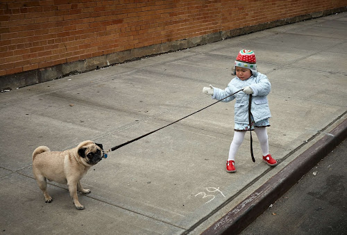 Little girl with light blue coat, white gloves, red and blue hat and red shoes training her tan pup on a leash on a big city sidewalk.