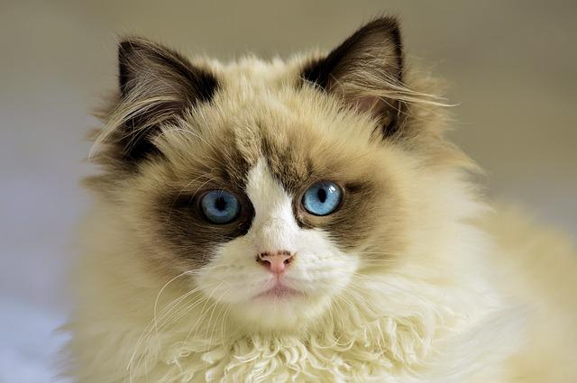 أسطورة القطط