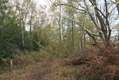 Autumn at Cleaver Heath