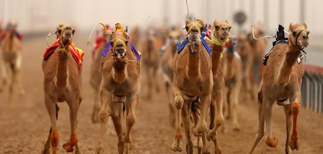 سباق الجمال دبي