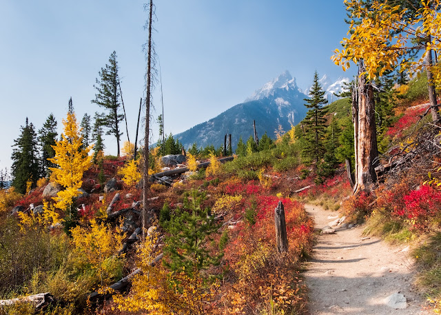 Fall foliage and mountain views in Wyoming